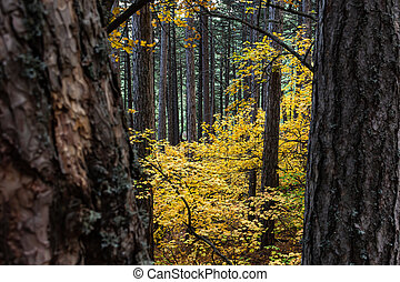 Deciduous and coniferous trees in autumn. Abstract autumn leafy background.