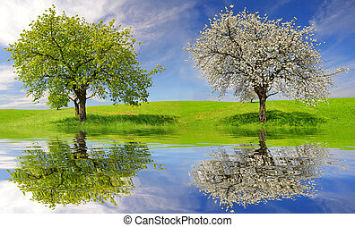 Deciduous and flowering tree on meadow. Spring landscape