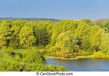 Deciduous forest near the lake in floodplain of river in springtime, view from hilly shore