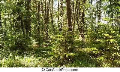 Deciduous forest European forest. Variety of trees. -...