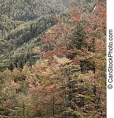 Deciduous forest in autumn colors, deaturated. Seasonal...