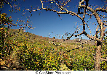 Deciduous forest in dryness - Dryness of deciduous forest at...