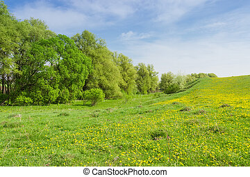Deciduous forest in floodplain near the hilly grassland overgrown with grass and dandelions in springtime