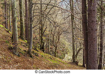 Deciduous forest in spring - Deciduous mountain forest in...
