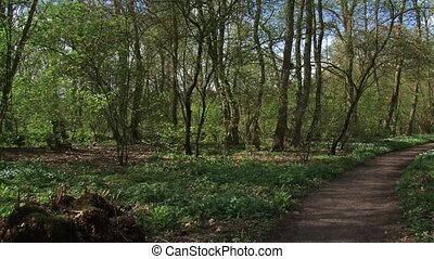 Deciduous forest in spring + pan path - pond