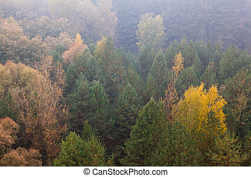 Deciduous forest in the autumn foggy day