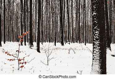deciduous forest in the park during the winter