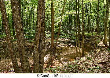 Deciduous forest in the summer - Landscape with deciduous ...