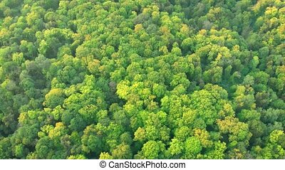 Slow, drone flyover of a deciduous forest wilderness, with densely growing trees, in Ukraine.
