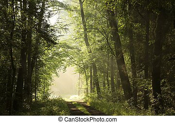 Deciduous forest on a foggy morning