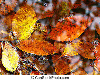 Deciduous leaves in the water