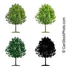 Deciduous tree in four different illustration techniques