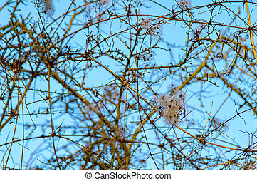Deciduous tree in the winter