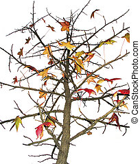 Deciduous tree with colorful leaves