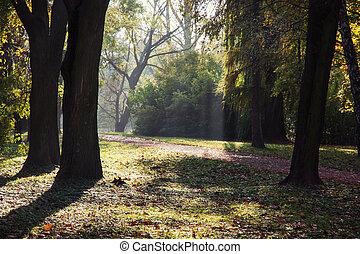 Deciduous trees in autumn park