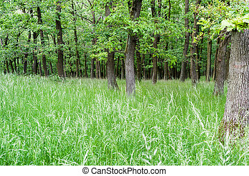 Deciduous trees in forest