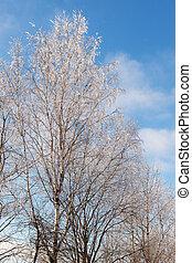 deciduous trees under snow
