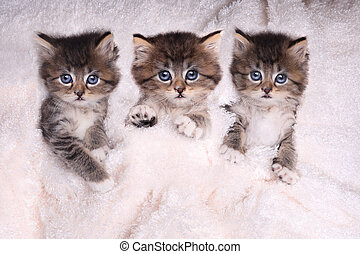 decke, liegen, bett, babykatzen