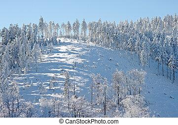declive, árvores inverno, nevado