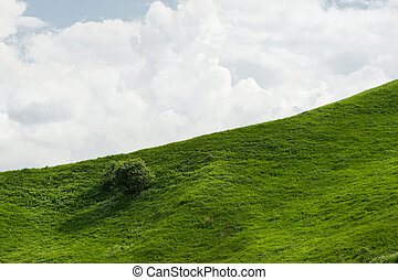 declive, azul, sonoma, raro, céu, capim, luxuriante, contra, clouds., suave, árvores verdes, vale, colina
