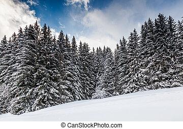 declive esqui, perto, megeve, em, alpes francês, frança