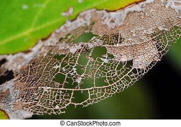 Decomposed Leaf