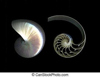 Deconstructed Nautilus - Deconstructed nautilus isolated on...