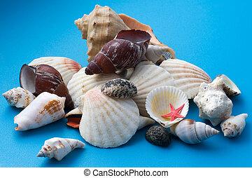 decor seashell on blue close up