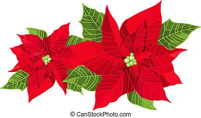 decoração, natal, poinsettia