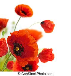 decoración, -, flores, amapolas, floral, esquina, frontera, ...