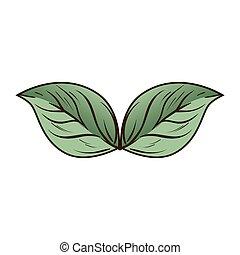 decoración, planta, hoja, naturaleza