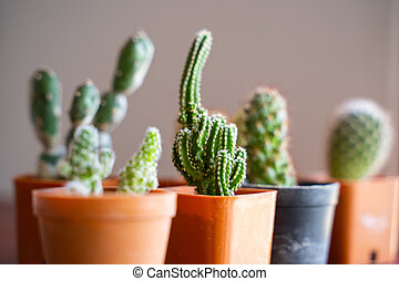 decorate home with cactus in pot