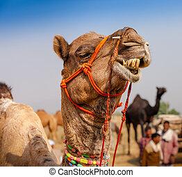 Decorated camel at the Pushkar fair. Rajasthan, India