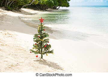 Decorated Christmas Tree Standing by the Sea Shore