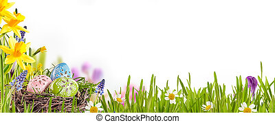 Decorated Easter eggs nestling in a birds nest amongst fresh green grass, yellow daffodils and daisies in a spring meadow forming a border over white with copy space