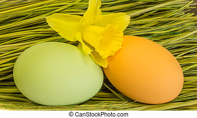 decorated easter eggs in the grass and Daffodils