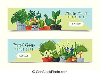 decoratief, exotische , gardening., tuin, beauty, succulent...