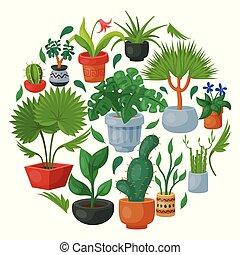 decoratief, exotische , woning, binnen, houseplant.,...