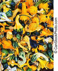 decoratief, gourds, kleurrijke