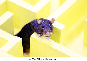 decoratief, grijs, rat