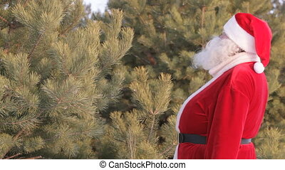 Santa decorating a fir-tree in forest
