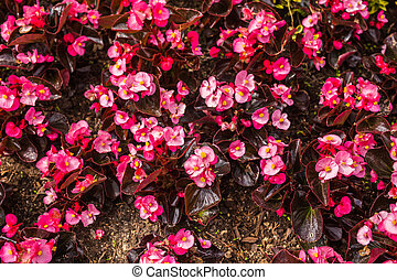 Decoration and nature concept - Beautiful pink flowers in garden