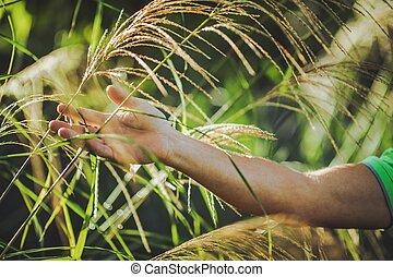 Decoration Grasses Care