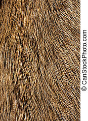 Decorative animal fur as a background texture