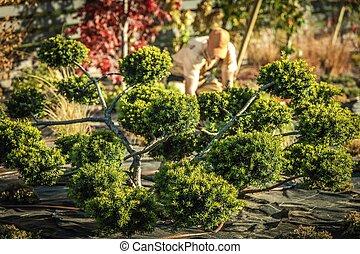 Decorative Beautiful Garden Tree