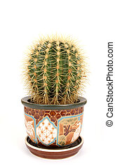 Decorative cactus on a white background