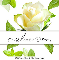 Decorative card with rose flower