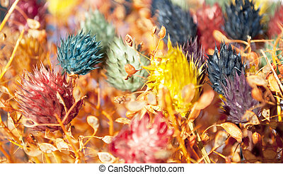 Decorative colorful dried flowers background
