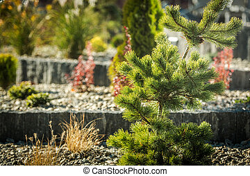 Decorative Conifer and Rockery Garden Close Up
