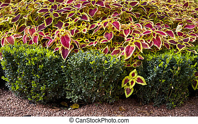 decorative design with colored leaves